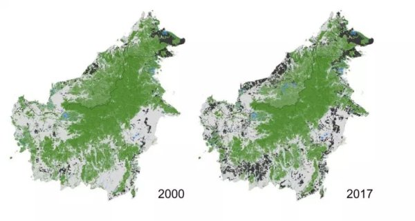 Is deforestation in Borneo slowing down?